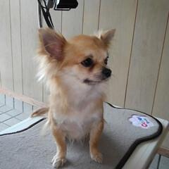 犬のシャンプー 今日は朝からパパさんが3匹のシャンプーを…