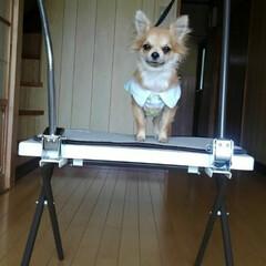 便利/グルーミングテーブル/ペット/犬 グルーミングテーブル買いました😃 3匹を…