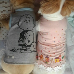 犬服ハンドメイド/犬服/リメイク/ペット/ハンドメイド/わたしの手作り 安い💴✨👛子供服を買ってリメイクした私の…