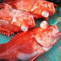 深海魚/絶品/お刺身/アコウダイ/船釣り/パパさんの釣果 今晩は😃🌃  今日久し振りに高知に船釣り…
