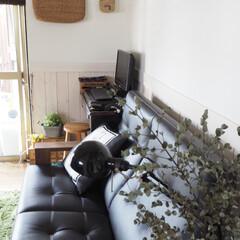セルフリノベーション中/築40年/ユーカリドライ/腰壁DIY/カリモク 元和室。 ソファの後ろの 腰壁は夫とふた…