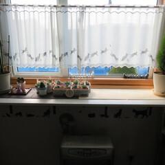 多肉/出窓/トレイ/DIY 出窓に1×4材で棚を足して見ました。