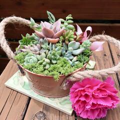 初心者/カーネーション、フェイク/多肉植物寄せ植え/多肉植物/母の日/グリーン/...  今年の母の日のプレゼント♪ 私の影響で…