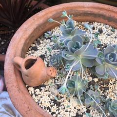 鉢植え/子持ち蓮華/ガーデン雑貨/ガーデン/多肉植物/グリーン/... 多肉ちゃんの鉢に 小さな小さなジョーロの…