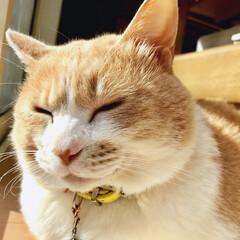 ネコと暮らす あ〜〜あ・たた・かぃ、、.zzZ