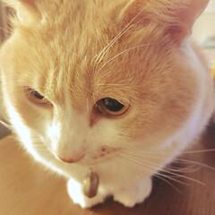バニラ🐈7.4キロ/ねこ=🐈バニラ/猫と暮らす生活 おはよ〜〜♡ 寒いニャ〜〜((≡゚♀゚≡…