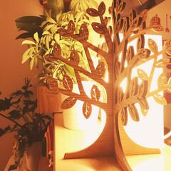 LED照明/木の置物 LED照明のかたい光を 和らげる様に 木…
