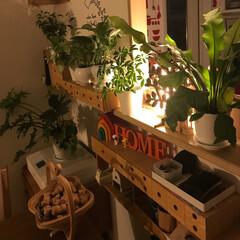グリーンのある暮らし/インテリア/間接照明のある暮らし ゆっくり☆まったり ムーディーな灯り✨で♡