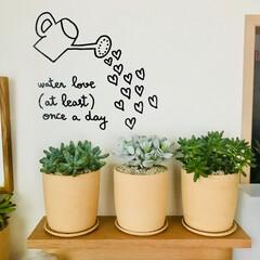多肉植物/ウォールステッカー/インテリア/無印良品/壁に付けられる家具 『water love(at least…
