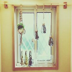 手作りプラントハンガー/手作りハーバリウム トイレの窓際 余り日差しのあたらない場所…