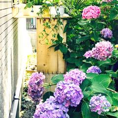 裏通路 裏庭じゃなくて 裏の通路に お隣さんの紫…