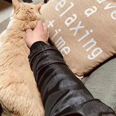 猫のいる暮らし 🥰🥰🥰