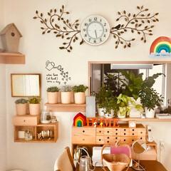 多肉植物/壁に付けられる家具/グリーン/インテリア/無印良品 ցօօժ ʍօɾղíղց🐓