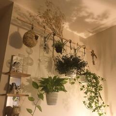 ラジオメーター/リサラーソン スパニエル/リサラーソン ブルドッグ/間接照明のある暮らし/グリーンのある暮らし/雑貨/... ゆっくり☆まったり 天井に映し出される …
