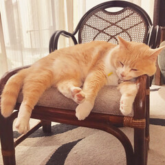 籐家具 夏は籐家具の出番🌿