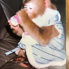 """その名は""""モモコ""""/お猿さん飼ってました 風呂上がりは ヤクルトだね‼️"""
