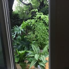 グリーンの給水所/グリーンの避暑地 27日連続☔️雨の仙台 夏の日差しを避け…
