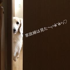 愛犬 久しぶりのイヴさん💕💕