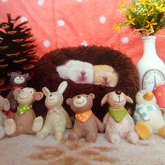 ウサギ/ペット 我が家で飼っているウサギが産んだ赤ちゃん…