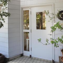 ホワイト/玄関ドア/木製玄関ドア/ガラス 木製のドアに、ガラスにはエッチングしてあ…