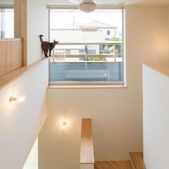 ネコ/猫/吹き抜け/天井扇/階段/キャットウォーク/... 階段吹抜スペース、棚や窓枠・手摺が猫の通…