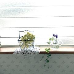 窓辺/ドライフラワー/生活雑貨 2階のトイレの窓辺  ワイヤーのバスケッ…