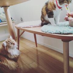 ネコ/猫/ペット/インテリア 昨日・ネコ会へ行って来ました⤴︎⤴︎🐈🐈…