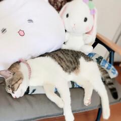 癒し/ペット ルビ様 寝ております。 い〜なぁ〜 私も…