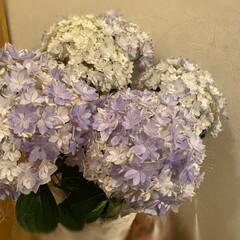 母の日 義母への母の日のお花を買って来ました。 …
