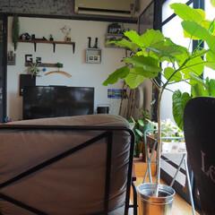 ソファ/カフェ風インテリア/リビングインテリア/珪藻土/観葉植物のある暮らし/アイデア投稿もしています/... 9月になったので、 少しずつ秋のインテリ…