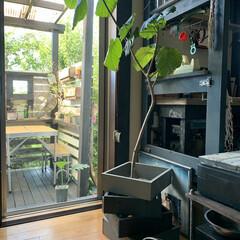 アイデア投稿もしています/鉢カバー/ディスプレイラック/アイアンペイント/観葉植物のある暮らし/カフェ風インテリア/... 端材でキューブボックスをDIYしました。…