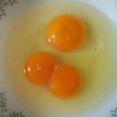 タマゴ/お弁当/卵/双子 今朝、厚焼きタマゴを作るので タマゴを割…