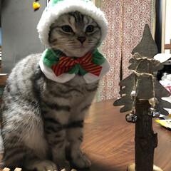 ペット/猫/にゃんこ同好会/クリスマス メリークリスマス!