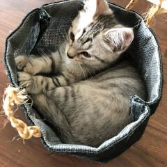 仔猫/セリア/ペット 取っ手の麻紐はボロボロになりました!(1枚目)
