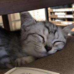 ネコ/ペット 寝顔、たまらん