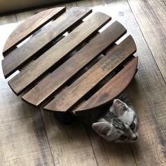 ニトリ/花台/仔猫 (1枚目)
