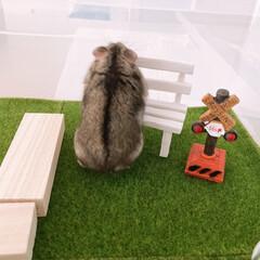 人工芝生/芝生調シート/芝生/グリーン/ハムスターガーデン/ペットガーデン/... ■ダイソー ハムスターの遊び場を作りまし…