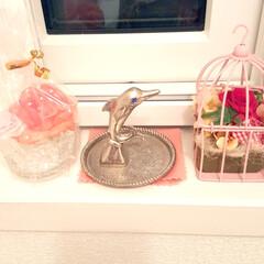 フラワー/花/窓辺/トイレ/シルバー/イルカ/... トイレの窓を飾ってみました❣