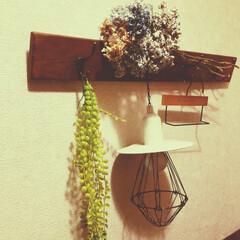 紫陽花/ドライフラワー/フェイクグリーン/ランプシェード/コートフック/梅雨/... 紫陽花のドライフラワー♪ 職場の裏手に咲…