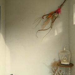 じょうろ/ブリキ/黒板/鳥かご/古家具/スワッグ/...