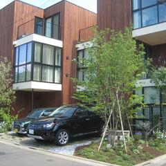 庭/ガーデン/外構 「青豆ハウス」という集合住宅の植栽計画を…