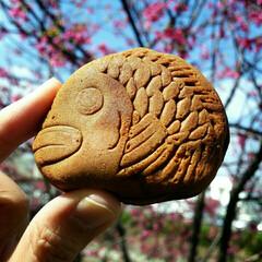 さくら/チョコレート/たい焼き/バレンタイン/フード/グルメ 昼休み 天下鯛へい チョコ餡 連れて川沿…