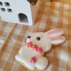 クッキー/うさぎ/スイーツ/雑貨 今日のおやつは…白ウサギクッキー🐰 食べ…