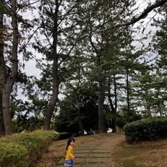公園/落ち葉/子育て/秋 秋の小路。 小さい頃遊んだ公園の小路。 …
