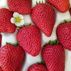 いちご/春/LIMIAごはんクラブ/わたしのごはん/グルメ/フード/... いただいた苺の中に小さな苺の花が🍓 農家…