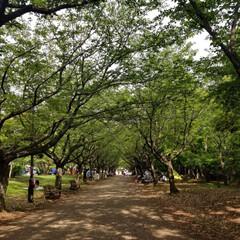 公園/GW/LIMIAおでかけ部/おでかけ/風景/わたしのGW くたくたになるまで遊んだ昼下がり。 木の…