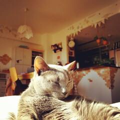 かわいい/可愛い/ペット/猫/インテリア/DIY 陽だまりで気持ち良さそう💕 日の光が当た…