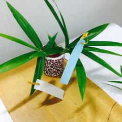 笹の葉/グラス/キャンドル/ガラス細工/赤/レッド/... 笹の葉に短冊つけると小さくても雰囲気上昇…
