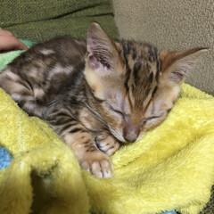 ハロウィン/ペット/猫/住まい まだまだ赤ちゃん(笑) 寝ている姿は天使…(1枚目)