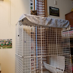 ケージ/愛猫/ペット どこにいるかわかる?? 実はケージの上が…